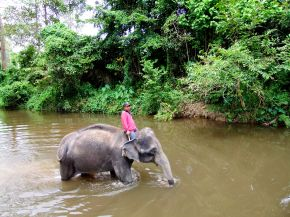 Obdachlose Elefanten