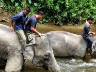 Weniger bekannt ist, dass für das NECC eine Gruppe von Indianern ihre traditionellen Hütten im Dschungel verlassen mussten. Palmölindustrie vertreibt Elefanten vertreibt Indianer... so dreht sich die Spirale immer weiter.