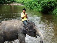 Besonders durch die ausgedehnten Plantagen der Palmölindustrie geht mehr und mehr Lebensraum der Elefanten in Westmalaysia verloren.