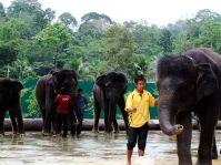 Rund zwei Stunden nördlich von Malaysias Hauptstadt Kuala Lumpur liegt das National Elephant Conservation Centre (NECC). Elefanten, die ihre Heimat verloren haben, finden hier ein neues Zuhause.