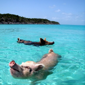 Die wahre Schweinebucht